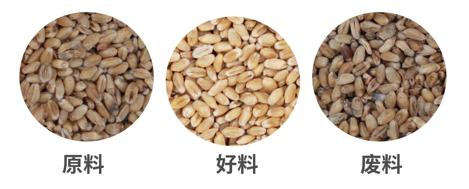 小麦小型色选机